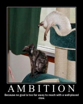 ambition1.jpg_595